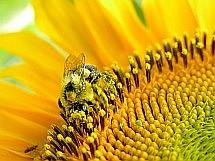 symbióza človeka a včiel
