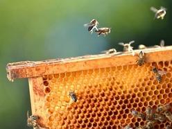 Včelár ak ponechá včelám na zimu len jeden druh medu, tak sa môžu vyskytnúť problémy, pretože med s vysokým obsahom glukózy v plástoch skyštalizuje a včely v zime nemajú možnosť doniesť vodu, aby takýto med rozpustili. Často včelári miešajú cukrový roztok o hmotnostnom pomere 3:2 cukru a vody lebo 1:1. Invertáza repného cukru pre včely nie je zadarmo. Pokial je v záujme včelára ušetriť, hľadá čosi lepšie: Fruktóza je monosacharid, tento cukor je pre včely ľahko stráviteľný a v plástoch nekryštalizuje. Preto